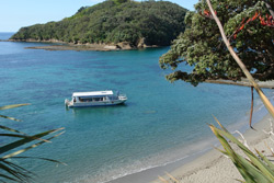 Whangateau Holiday Park is near Whangateau Harbour in the Hauraki Gulf